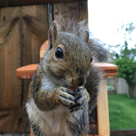 Kevin.. Our pet squirrel by Alan (Mop) Lewis - Instagram & Mobile iPhone