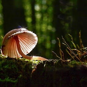 by Marianna Armata - Nature Up Close Mushrooms & Fungi ( mushroom, stump, canada, green, moss, forest, sparkle, marianna armata, fungi, tree, autumn, fall, light )