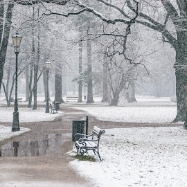 Snow in park by Witold Steblik - City,  Street & Park  City Parks ( nature, bench, park, snow, city park )