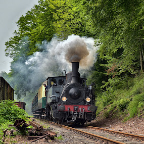 As In The 1900s by Marco Bertamé - Transportation Trains ( steam engine, fond-de-gras, vintage, green, locomotive, forest, steamer, train 1900, steam, luxembourg )