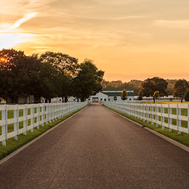 Harlinsdale Farm by Zack Massey - Landscapes Prairies, Meadows & Fields ( field, farm, fence, sky, sunset, harlinsdale farm, nashville, tennessee, trees, franklin )