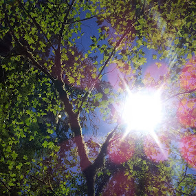 sunshine by Kaitlyn Smith - Nature Up Close Trees & Bushes ( nature, sun spots, olympic national park, trees, hoh rainforest )