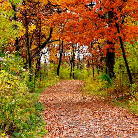 Fall Walk by Tracy Marie - Landscapes Forests