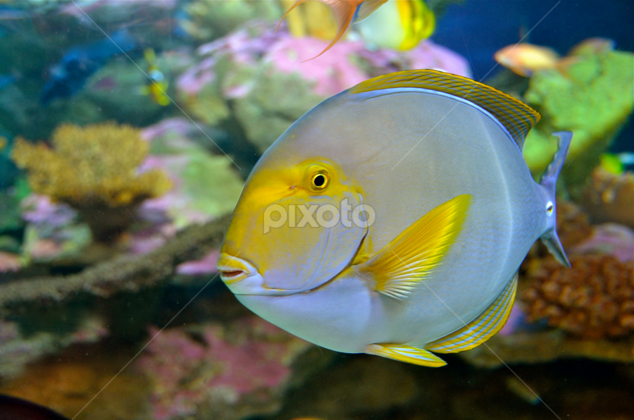 Bennie by Mauritz Janeke - Animals Fish ( fish.,  )