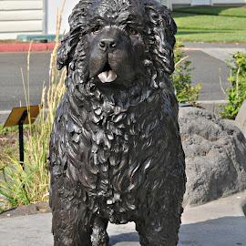 Seaman, the explorer dog by Leise Wease  Photography - Buildings & Architecture Statues & Monuments ( history, explorer, statue, seaman, dog, black,  )