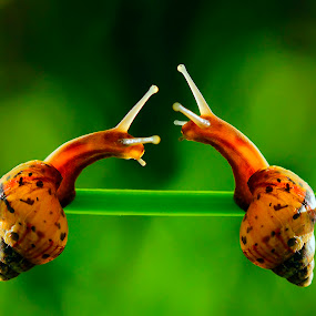 kiss me by Firmansyah Goma - Animals Other ( kiss, macro, snail )