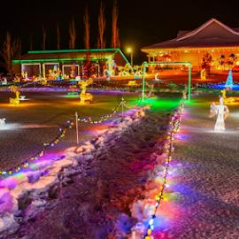 Christmas Celebraction by Joseph Law - Public Holidays Christmas