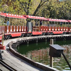 Train by Michele Kelley - Transportation Trains ( red, train, lake, transportation, long )