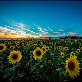 by Jeremy Plant - Landscapes Sunsets & Sunrises