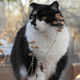 Casimiro the CAT by Marcus Carlini - Animals - Cats Playing