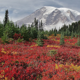 Mt. Rainier by Ramsey Samara - Landscapes Mountains & Hills ( red, paradise, mt. rainier, autumn, washington, national parks )