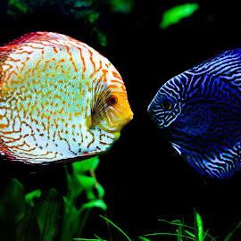 by Judy Rosanno - Animals Fish
