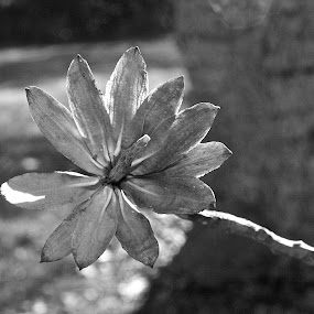 Wooden Flower by Michelle Baity - Nature Up Close Trees & Bushes ( blackandwhite, nature, bw, branch, closeup, close-up )