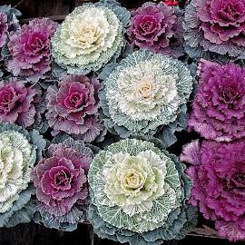 OLI fruitveg 08 by Michael Moore - Nature Up Close Gardens & Produce