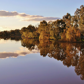 Reflections In Benalla by Leigh Thomson - Landscapes Waterscapes ( water, eucalypts, reflections, travel, landscape, nature, sunset, gums, australia, trees, victoria, evening, benalla, river )