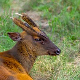 ANIMAL_26_2017 by Malay Maity - Animals Other Mammals ( animal )