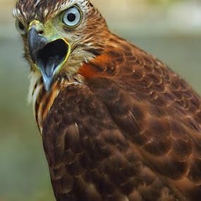 Look  by Dimas N - Animals Birds