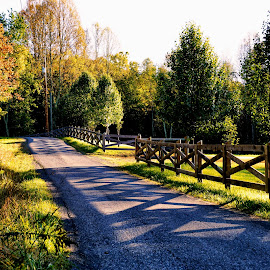 Shadows on the Lane by Cathy Sutherin - Uncategorized All Uncategorized ( autumn, colorful, trees, road, landscape, leaves, lane )