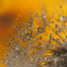 by Lidy Kerr - Abstract Macro