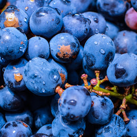 Blue grapes by Shiva Ranjita - Food & Drink Fruits & Vegetables ( fresh, grapes, blue, fruits, day,  )