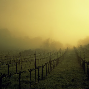 Vineyard mist by Suzanne Black - Landscapes Sunsets & Sunrises (  )