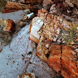 Petrified Wood Close Up by Dale Kesel - Nature Up Close Rock & Stone ( landmark, ancient, desert, arizona, petrified wood, stone, stone-like, artistic objects, landscape, rust, rustic, historic )