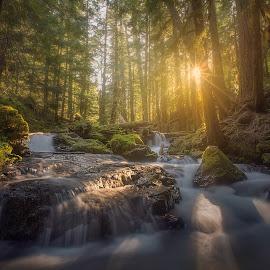 P A N T H E R   C R E E K by Phillip Norman - Landscapes Forests ( washington, creek, panther )