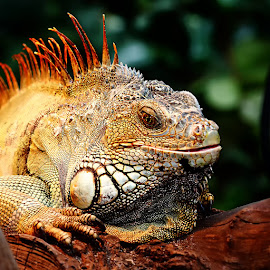 Sourire de batracien by Gérard CHATENET - Animals Reptiles
