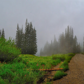 A Drive Through the Clouds by Jeannie Matteson - Landscapes Forests