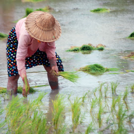 Working at the field. by Moe Swe - People Professional People ( culture, place, travel, people, food )