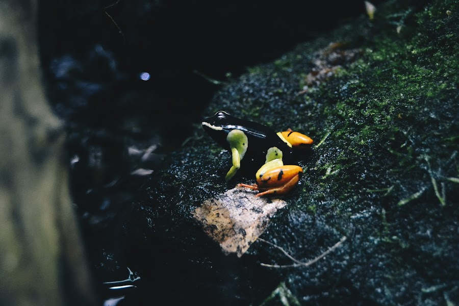 Frog by Valentina Cantera - Animals Reptiles ( frog, natural, color, nature, frogs, colorful, colors )
