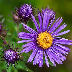 flower macro.jpg