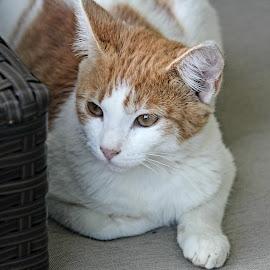 Kitty kitty by Keysha Wallace-Patton - Animals - Cats Portraits