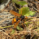 Great Orange Huntsman Wasp