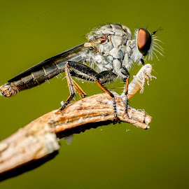 fly killer by Minh Hải - Animals Insects & Spiders ( red, green, beautiful, light, fly killer )
