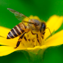 sunflowers and bees by Azlan Yaacob - Nature Up Close Gardens & Produce