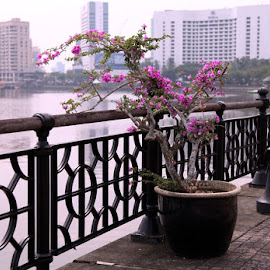 Stand Alone by Ellmok Mokh - City,  Street & Park  Vistas ( waterscape, flowers, waterfront )