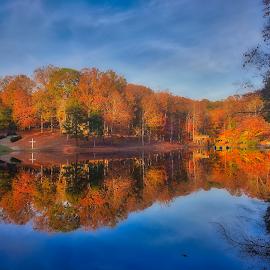Caraway by Michael Gonzalez - Landscapes Forests ( camp, colorful, autumn, beautiful, landscape )