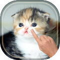 Magic Touch - Cute Cat APK for Ubuntu