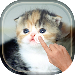 Magic Touch - Cute Cat APK