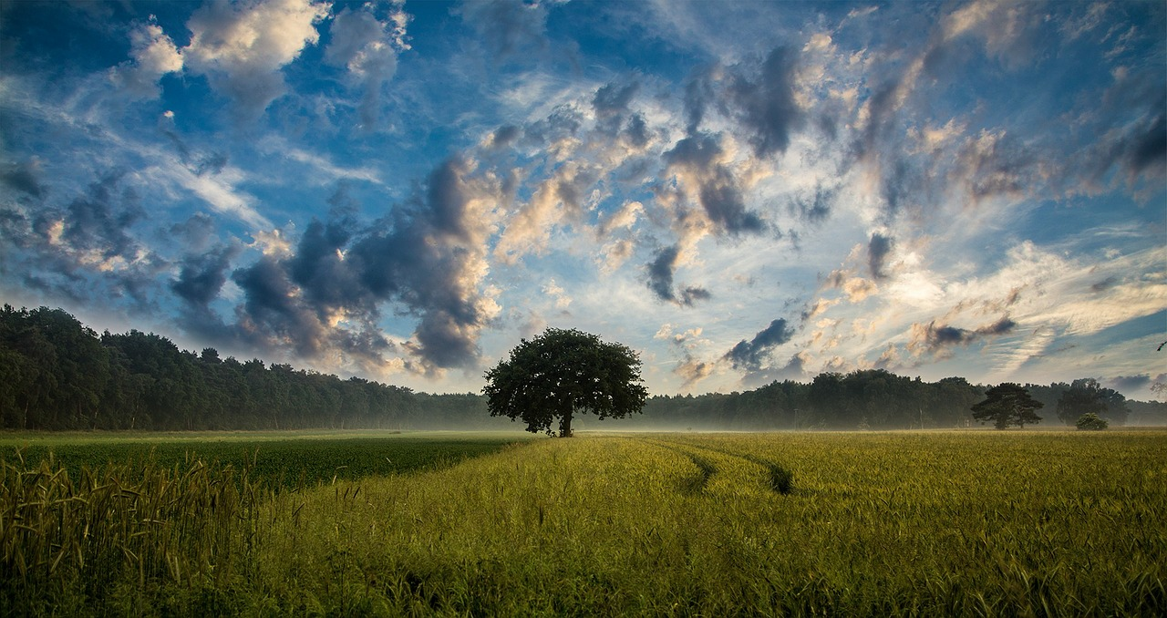Consumo exagerado: o Planeta ainda consegue se regenerar?