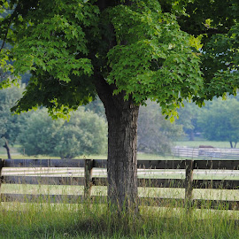 Tree along Fence by Ginny Anderson - Landscapes Prairies, Meadows & Fields ( farm, fence, tree, green, serenity, renewal, trees, forests, nature, natural, scenic, relaxing, meditation, the mood factory, mood, emotions, jade, revive, inspirational, earthly )