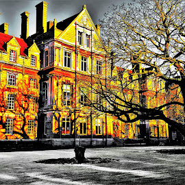 Trinity College by Nick Remick - Buildings & Architecture Public & Historical ( red, europe, ireland, tree, dublin, college, grey, yellow, shadows )