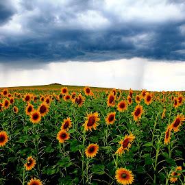 by Ghimpe Cristian - Landscapes Prairies, Meadows & Fields