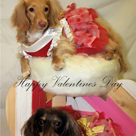 Gracie and Lucy by Ann Prince - Typography Captioned Photos ( hearts, dogs, valentines, pets )