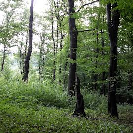 Гора. by Georgi Kolev - Nature Up Close Trees & Bushes ( гора., храсти., зелен., светлина., дървета. )