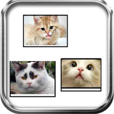 Funny Cats Puzzle Game