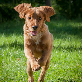 Playtime by Tom Egil Dørum - Animals - Dogs Running ( animals, dogs, grass, puppy, dog, garden, playtime, animal )