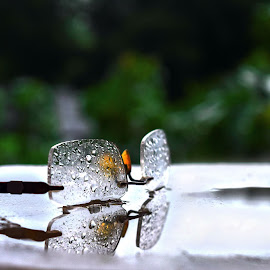Rain Bath by Rana Ghosh - Abstract Water Drops & Splashes