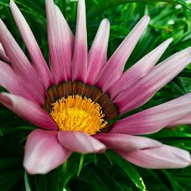 by Janette Ho - Flowers Flower Gardens